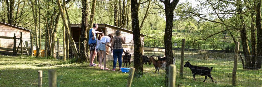 Visitez les animaux du camping